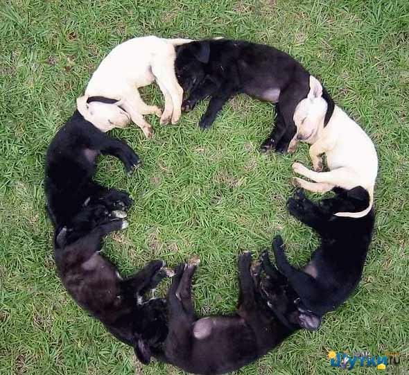Песики  - кругом